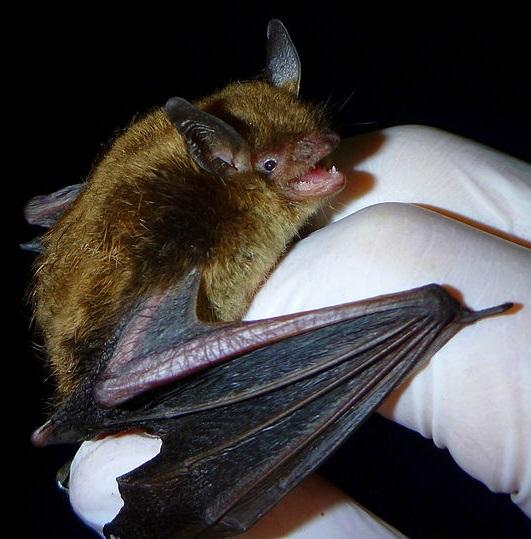 Naturespect Net  All-about-bats Html