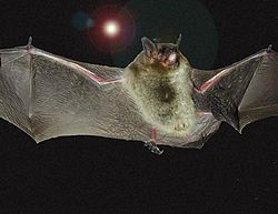 Http Www Naturespect All About Bats Html Animal Damage Control